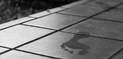 277/366: leave you behind (Andrea  Alonso) Tags: me poetry poesia art arte pies feet huella footprint blancoynegro blackandwhite 366 365