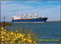 Ozge Aksoy 1560 LR (bradleybennett) Tags: cargo vessel ship shipping delta water river ocean tanker antioch port stockton ozge aksoy
