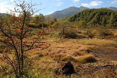 Autumn (Teruhide Tomori) Tags: landscape sky wetland forest tree nagano japan nature          autumn  norikura