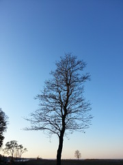 . (presteza777) Tags: trees sea cost samsung russia alexandria finland peterhof autumn