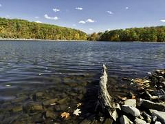 (shamal1) Tags: pennsylvania landscapes trees water lake autumn fall rocks leaves shoreline driftwood
