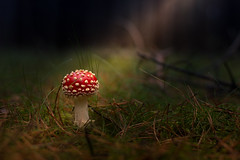 sunbathing (Andy Buchholz) Tags: mushroom forest autumn red green wood nikon nikond7200 nikondeutschland germany wald fliegenpilz pilz