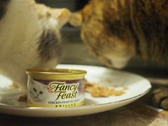 Fancily Feasting (Raccoon Photo) Tags: pet cats pets cute cat eyes kitten little adorable kitty ears kittens pixie cateyes stardust cattitude catfamily eyes russian kamalani cat cats kittens shitten