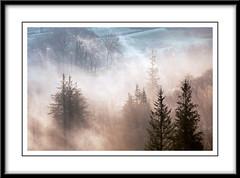Morning Mist (Andy Redhead Photography) Tags: uk trees mist misty sunrise glow grasmere lakedistrict landscapephotography whitemoss andyredheadphotogaphy