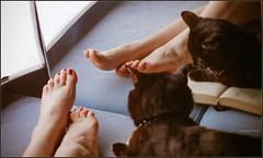 beautiful legs (Yepanchintcev Aleksey) Tags: reflection cute feet girl beauty fetish cat foot mirror high toes legs sweet arches barefoot lovely sexuality rednailpolish footjob girlsfeet girlslegs