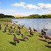 Herrington Country Park (6)