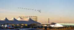 Canadian Geese flying over Etihad Campus (I.T.P.) Tags: city campus manchester stadium etihad
