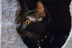 Avoir la Cat attitude! (Martial Soula) Tags: cat nikon chat nikkor 1755 nikonfrance nikonpassion d300s hautessensibilits nikond300s vitesseslentes