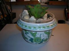 Cactus-Tillandsia-3d (cuirung) Tags: jade gollum haworthia airplant crassula felina faucaria perforata tigerjaw cactustillandsia bulbbolsa