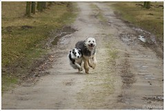 Samen rennen (7D024238) (Hetwie) Tags: dog pet jessie wandelen nederland hond kanaal huisdier noordbrabant bruc helmond