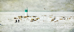 Jordan Harbour (Alex Bruce Photo) Tags: winter people lighthouse snow texture ice birds frozen rocks harbour jordanharbour