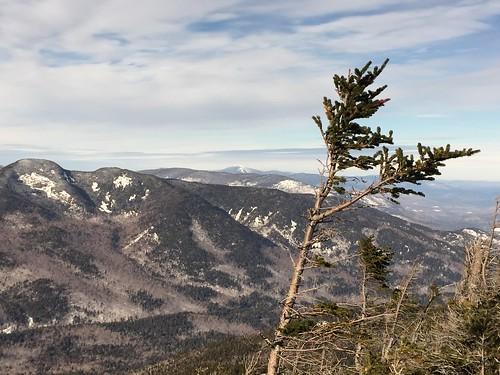 7Windswept tree on summit