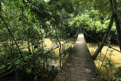 Bridge inside Khao Yai National Park (Geourjon Benoit) Tags: park bridge 2 wild nature sign forest warning canon river thailand colorful asia pov path mark south over deep east national jungle crocodile huge 5d asie 16 35 khao yai