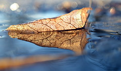 illumination (joy.jordan) Tags: winter light sunset color reflection texture puddle leaf bokeh