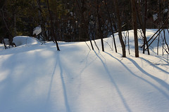 Rolling Hills of Snow (view2share) Tags: wood trip travel camping winter shadow camp snow reflection mi forest relax fun march cool woods peace shadows michigan reserve sparkle clean wilderness snowfall upperpeninsula refreshing contemplate renewal northwood wintercamp northwoods uppermichigan wintercamping 2015 northernmichigan houghtoncounty wintertravel march2015 march12015