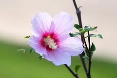 ......... (Jill-Wang) Tags: leica flower macro 100mm fujifilm xpro1 jillwang