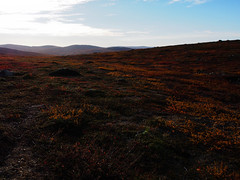 P9164161.jpg (Qinuq) Tags: autumn nature syksy luonto