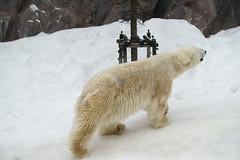LEAVE (Hsuanya Tsai) Tags: travel japan zeiss zoo hokkaido sony fullframe alpha za asahiyama asahikawa a7r emount ilce7r sel2470z fe2470mmf40