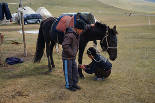 Kyrgiz horse