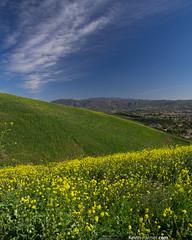Yellow Bloom (kevin-palmer) Tags: california blue winter sky green grass yellow sunny southern wildflowers february blooming yorbalinda chinohillsstatepark kevinpalmer tamron1750mmf28 pentaxk5