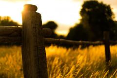 July (--Conrad-N--) Tags: summer fence friday field corn golden hff soft light