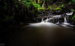 Stream into the darkness (Nick in t Veld) Tags: green nikon stream lee slowshutter ferns nikkor mossy moist 1755 ruleofthirds 10stop d7000 triggertrap