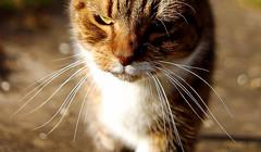 Little Miss Grumpy (Sarah Fraser63) Tags: pet cat feline whiskers