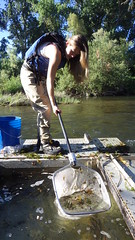 Cleaning Fish Trap