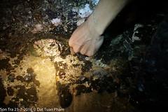 Sn Tr  Nng (dzungdad) Tags: outdoors leatherman titanium beach rush