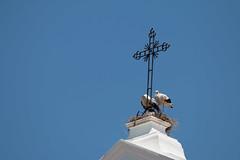 Sacred Union (jackparrot0) Tags: sky portugal church birds cross nest chicks nursing stalks brood