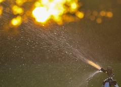 204 of 366 (Ogedn) Tags: sprinkler water sunset sun summer garden