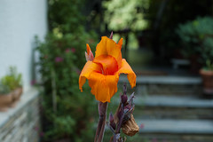 Orange (drteddy) Tags: experimental flowers
