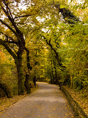 autumn alley (dochev30) Tags: tree forest autumn fall nature lgg5 lg g5 mobile photography landscape green