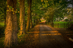 Rookery House Laceby UK- (Allan A Albery) Tags: blue lightroom landscape sonya7ii sonyzeiss2470mmfe sunset road autumn sun rays shadows trees leading line