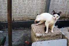 Cats - Mumbai, India (Maciej Dakowicz) Tags: india mumbai bombay colaba market animal cat moment