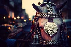 ZulJinnah 2 (Fortunes2011. Closure of 6 years) Tags: horse decorated animal portrait bokeh muharam 2016 muharram ashure ashoor ashura islam shia imamhussain karachi