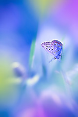 Somewhere.... (Marilena Fattore) Tags: macro artistic canon tamron colors fantasy creativity nature closeup focus butterfly light blue pastel lightblue purple papillons mariposa selicate softness yellow garden animals grass