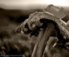 Bad trip (D Paul U) Tags: mushroom fungus snail psychedelic poisonous bad trip