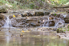 Water Running over Rocks (Manon Damoon) Tags: water fall rocks sticks leaves bettendorf iowa green browns yellows canon 7d tamron tamron70200f28