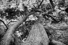 DSC05491-93_HDR_SEP2 (Capt Kodak) Tags: autumn chattahoocheerivernationalrecreationarea fall hdrefexpro2 madefrom3images medlockbridgepark nationalparkservice nikcollectionbygoogle niksoftware photomerge silverefexpro2