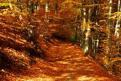 (sevdelinkata) Tags: forestimages tree mountain osogovo bulgaria outdoor
