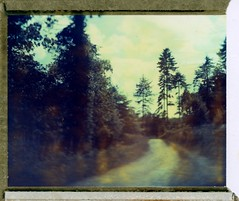 (Matt Chalky Smith) Tags: roidweek polaroid expiredfilm speedgraphic woods cornwall blur tiltshift trees type59