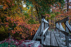 16-12787.jpg (kgsix) Tags: manchester fallcolors trails trees connecticut plants usa transportation paths unitedstates us