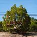 Trees_of_Loop_360_2014_004