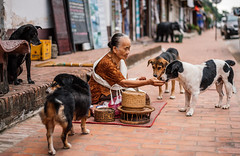 Street scene, Luang Prabang, Laos (syukaery) Tags: street old trip travel food woman dogs asian 50mm nikon asia compassion canine d750 kindness laos humaninterest