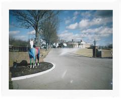 Color Bar Horse (bogray) Tags: color fuji lexington ky publicart colorbars propack polaroidcamera instantfilm fp100c horsemaniaii wkyttv randomwhiteblobs