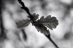 _NIK1344 (nikdanna) Tags: primavera leaf spring pentax ramo bough interno7 fogli nikdanna
