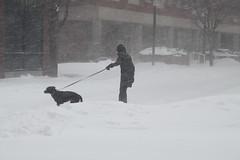Dog Walker in Snowstorm (atsolo) Tags: winter snow storm boston blizzard brookline juno noreaster northeaster