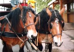 (sftrajan) Tags: horses horse france cheval caballos 1999 chambord pferde loirevalley cavalli cavallo pferd chevaux loiretcher hst  hstar valdeloire france1999     schlosschambord