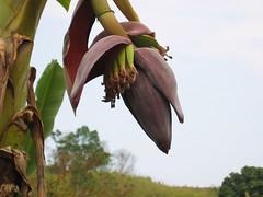 Flowers in Thai Hills